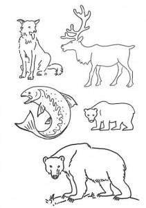 звери Камчатки