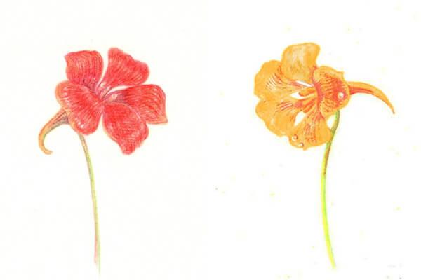 рисунок цветка